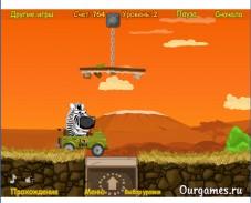 Зебра на трассе
