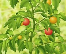 Собрать помидоры