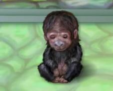 Моя обезьянка