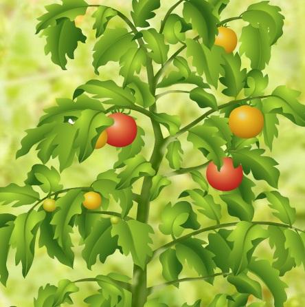 Игра Собрать помидоры онлайн