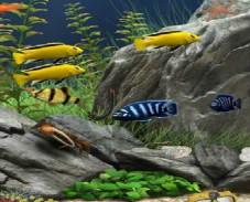 Игра Аквариум с рыбками онлайн