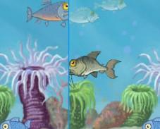 Игра Рыбные отличия онлайн