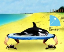 Игра Спасите дельфина онлайн